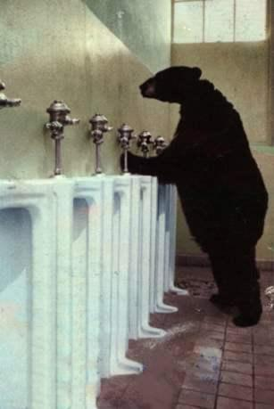 bear-pissing-washroom-humor-photos