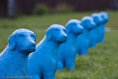 blue-dog-3