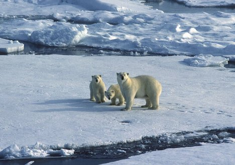 http://problembear.files.wordpress.com/2009/09/polar-bears-climate-change-schools.jpg